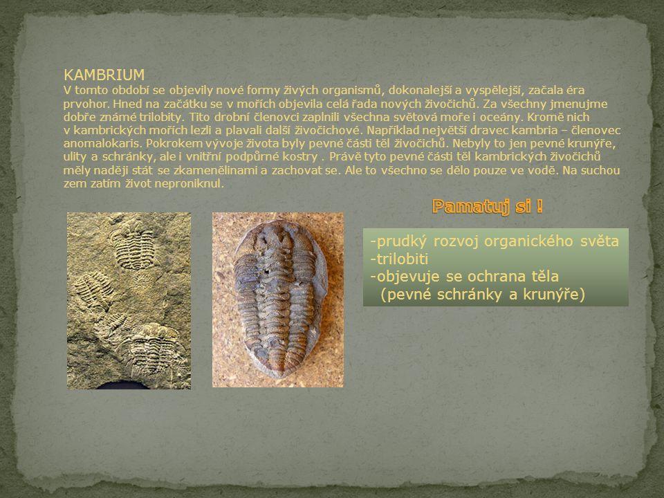 PREKAMBRIUM V tomto období se na Zemi objevily první živé praorganismy. Byly to primitivní, velmi jednoduché mikroorganismy, které ještě neměly pevnou