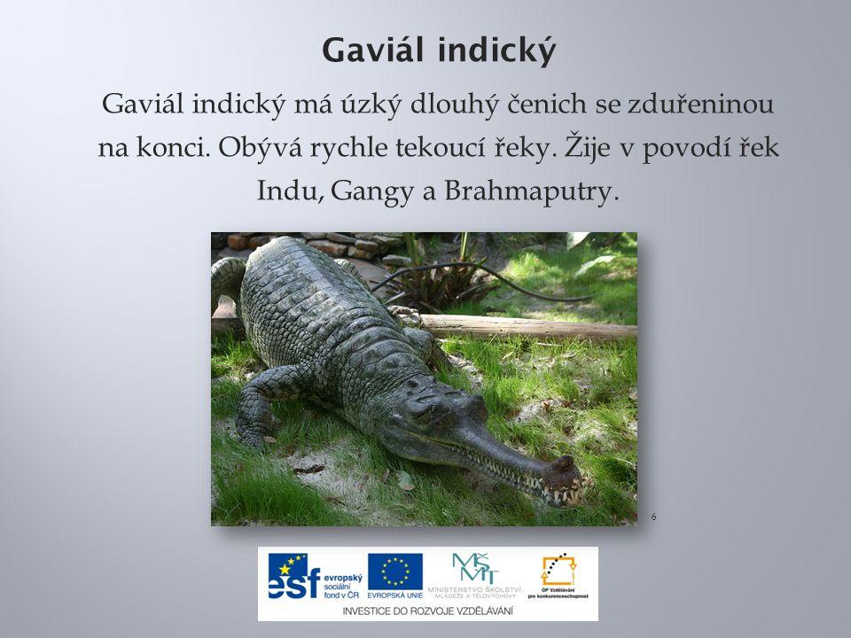 Gaviál indický Gaviál indický má úzký dlouhý čenich se zduřeninou na konci.