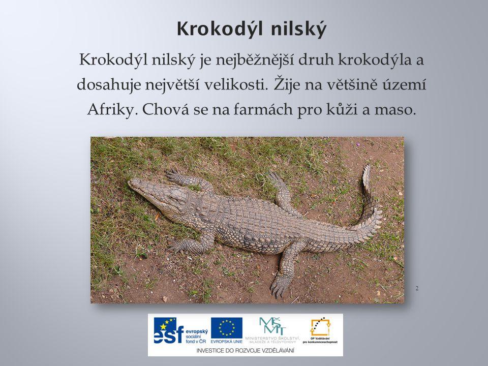 Krokodýl nilský Krokodýl nilský je nejběžnější druh krokodýla a dosahuje největší velikosti.