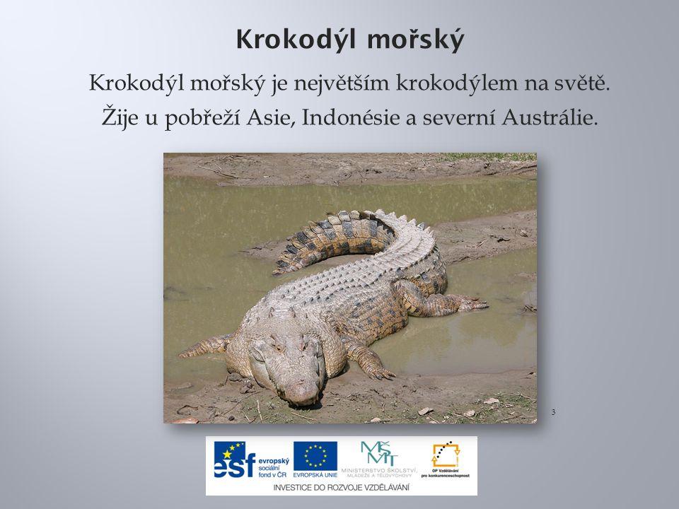Krokodýl mo ř ský Krokodýl mořský je největším krokodýlem na světě.