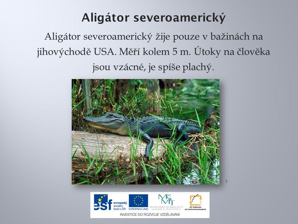 Aligátor severoamerický Aligátor severoamerický žije pouze v bažinách na jihovýchodě USA.