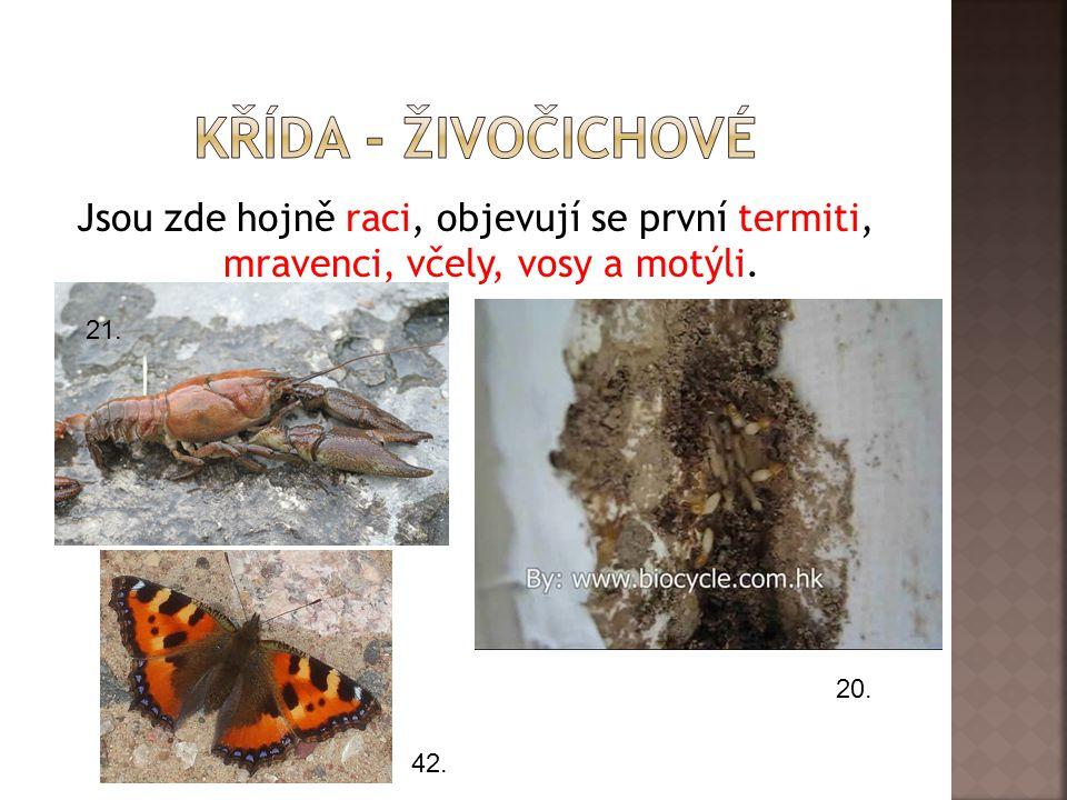 Jsou zde hojně raci, objevují se první termiti, mravenci, včely, vosy a motýli. 20. 21. 42.