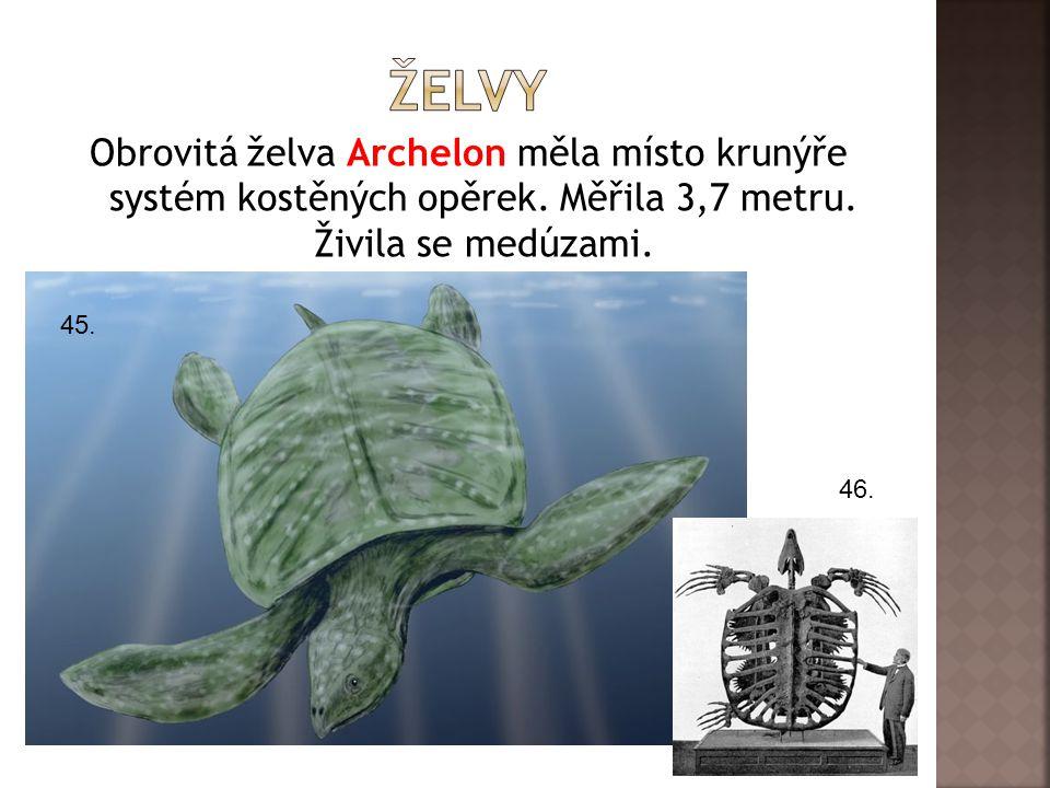 Obrovitá želva Archelon měla místo krunýře systém kostěných opěrek.