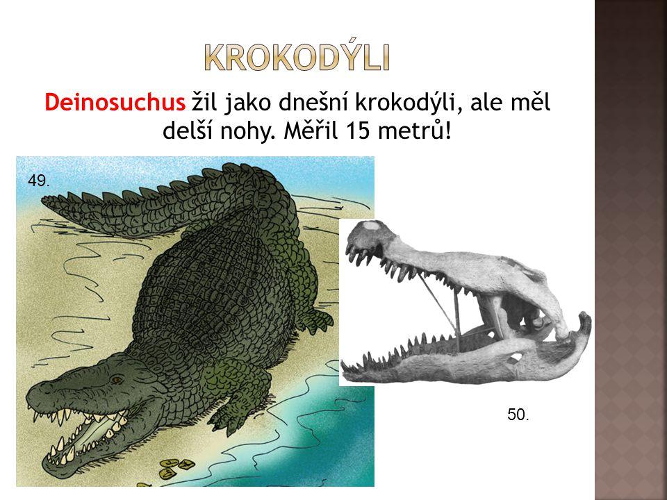 Deinosuchus žil jako dnešní krokodýli, ale měl delší nohy. Měřil 15 metrů! 49. 50.