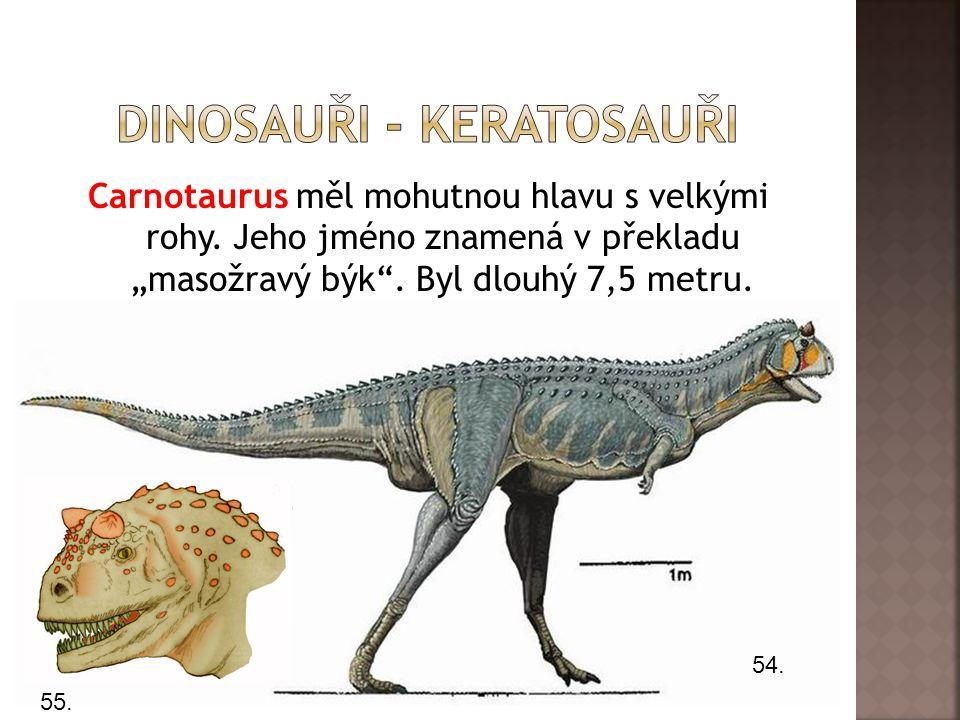 """Carnotaurus měl mohutnou hlavu s velkými rohy.Jeho jméno znamená v překladu """"masožravý býk ."""
