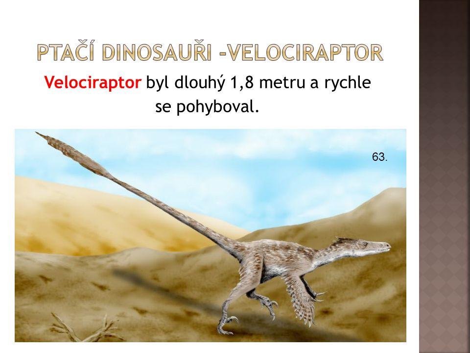 Velociraptor byl dlouhý 1,8 metru a rychle se pohyboval. 63.