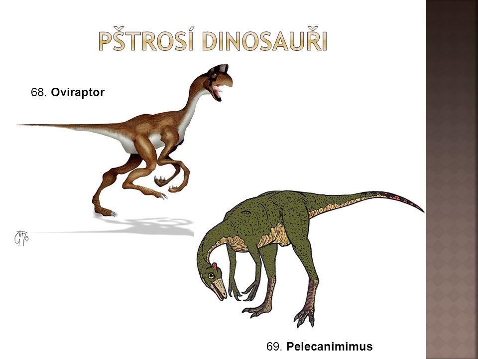 68. Oviraptor 69. Pelecanimimus