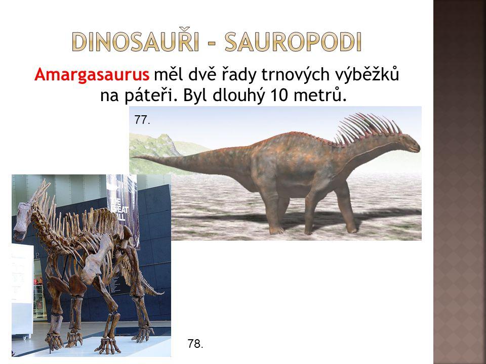 Amargasaurus měl dvě řady trnových výběžků na páteři. Byl dlouhý 10 metrů. 77. 78.