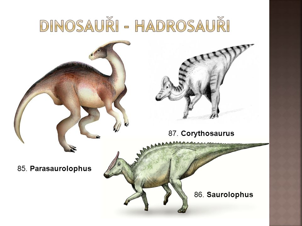 85. Parasaurolophus 87. Corythosaurus 86. Saurolophus