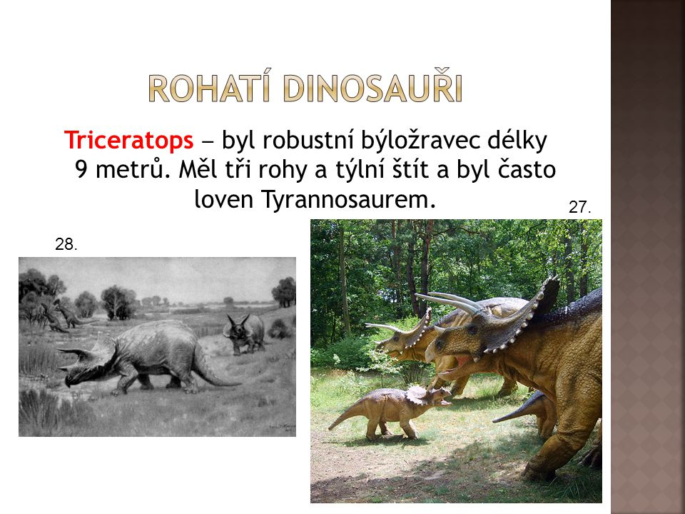 Triceratops ‒ byl robustní býložravec délky 9 metrů.