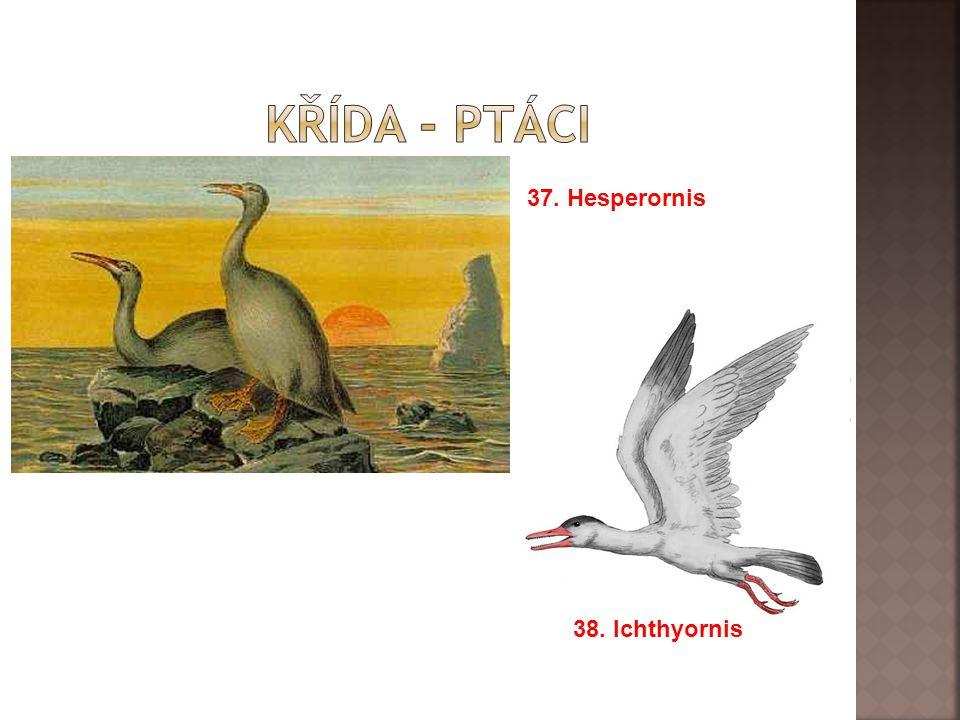 37. Hesperornis 38. Ichthyornis