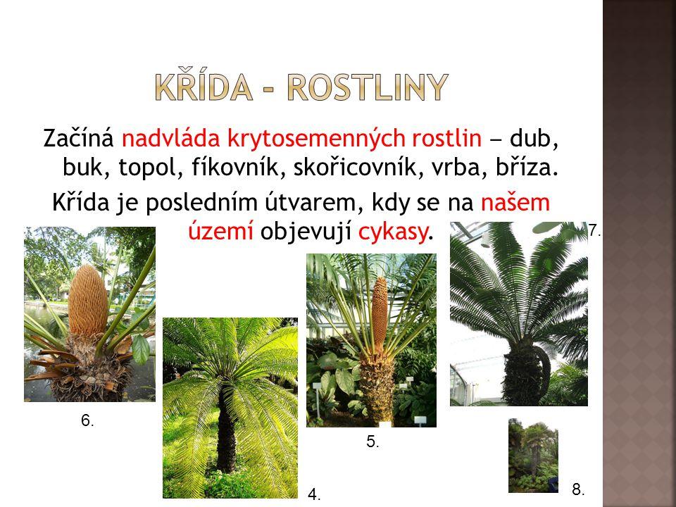 Začíná nadvláda krytosemenných rostlin ‒ dub, buk, topol, fíkovník, skořicovník, vrba, bříza.