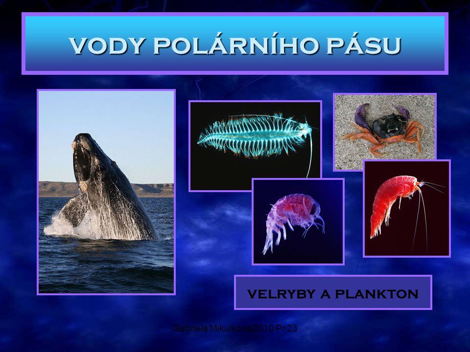 Gabriela Mikulková 2010 Pri23 vody polárního pásu velryby a plankton