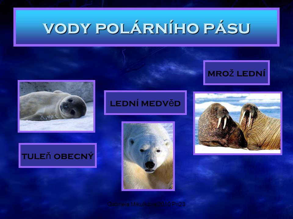 Gabriela Mikulková 2010 Pri23 tule ň obecný mro ž lední lední medv ě d vody polárního pásu
