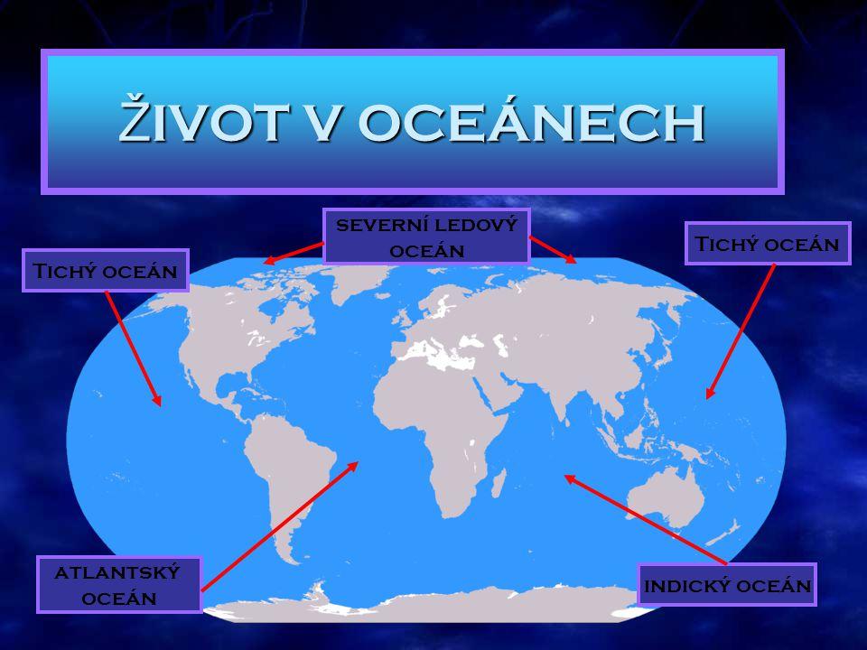 Gabriela Mikulková 2010 Pri23 Ž IVOT V OCEÁNECH Tichý oceán indický oceán atlantský oceán severní ledový oceán
