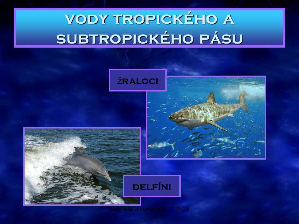 Gabriela Mikulková 2010 Pri23 vody tropického a subtropického pásu ž raloci delfíni