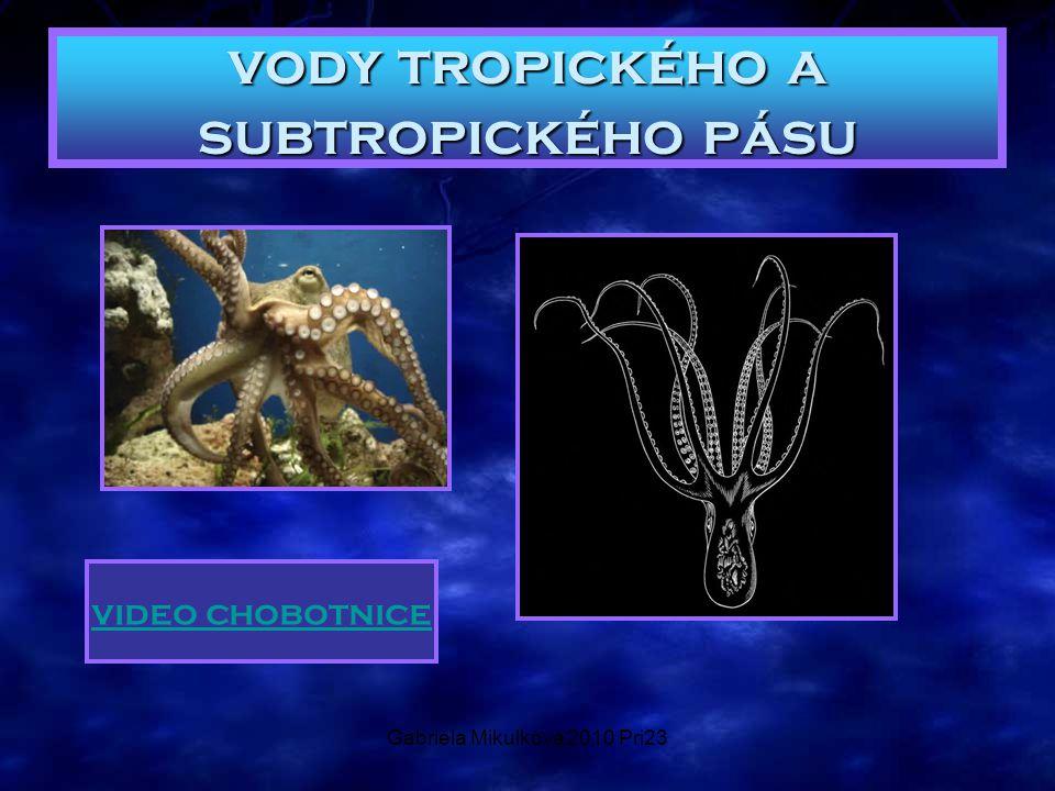 Gabriela Mikulková 2010 Pri23 vody tropického a subtropického pásu video chobotnice