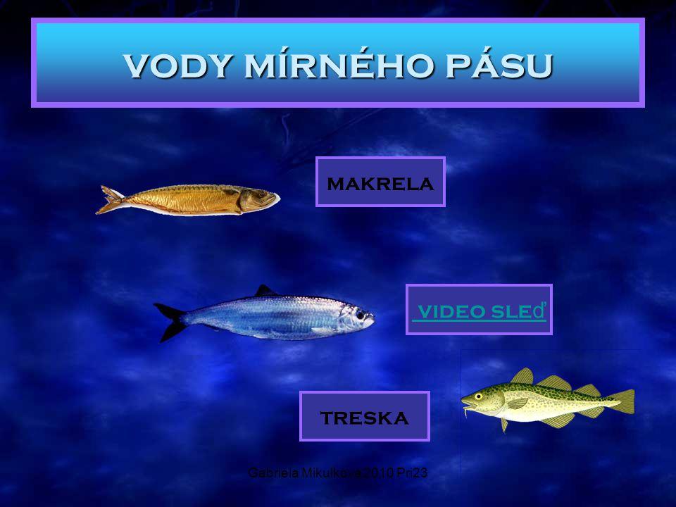 Gabriela Mikulková 2010 Pri23 vody mírného pásu makrela video sle ď treska