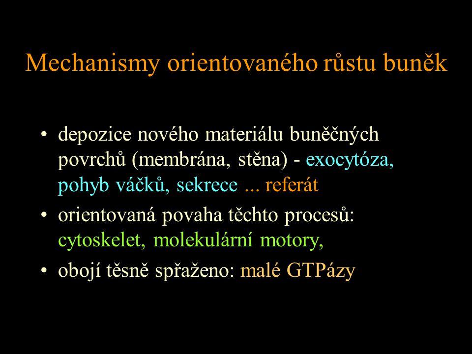 Mechanismy orientovaného růstu buněk depozice nového materiálu buněčných povrchů (membrána, stěna) - exocytóza, pohyb váčků, sekrece... referát … orie