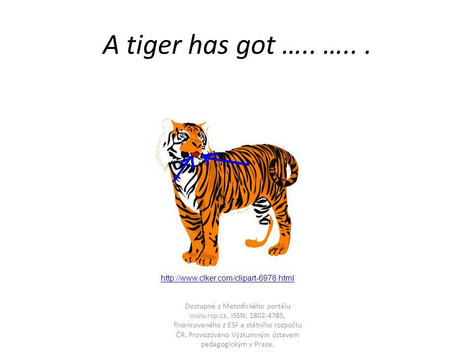 A tiger has got ….. …...