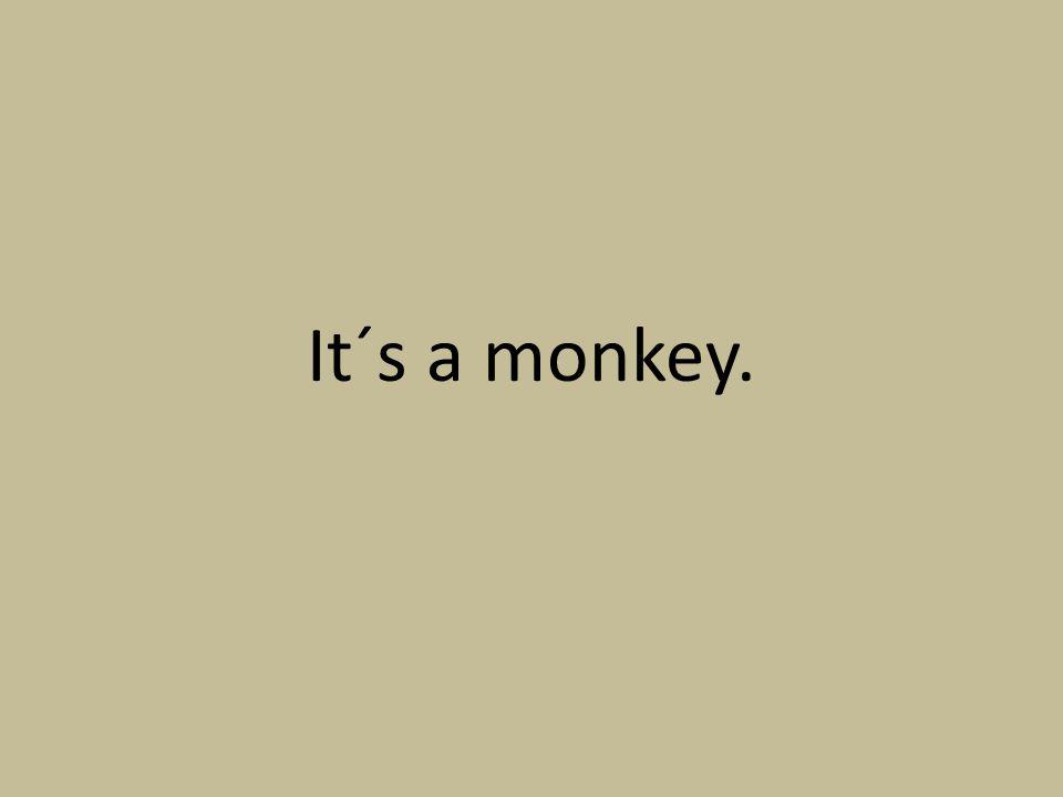 It´s a monkey.