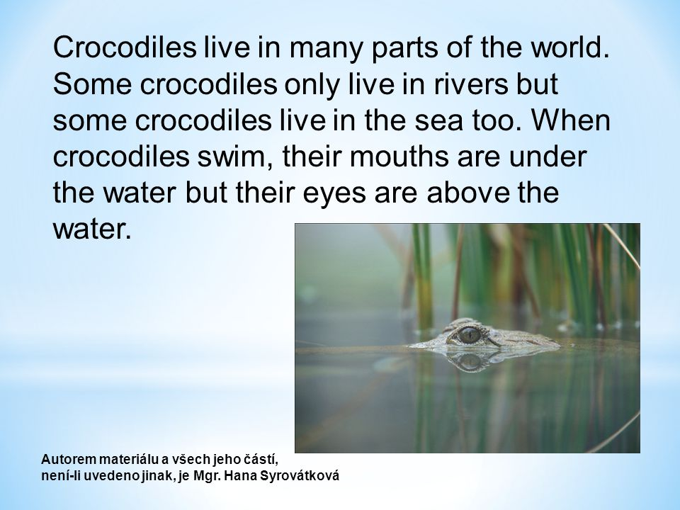 Crocodiles eat birds, animals, fish, and sometimes they eat people too.