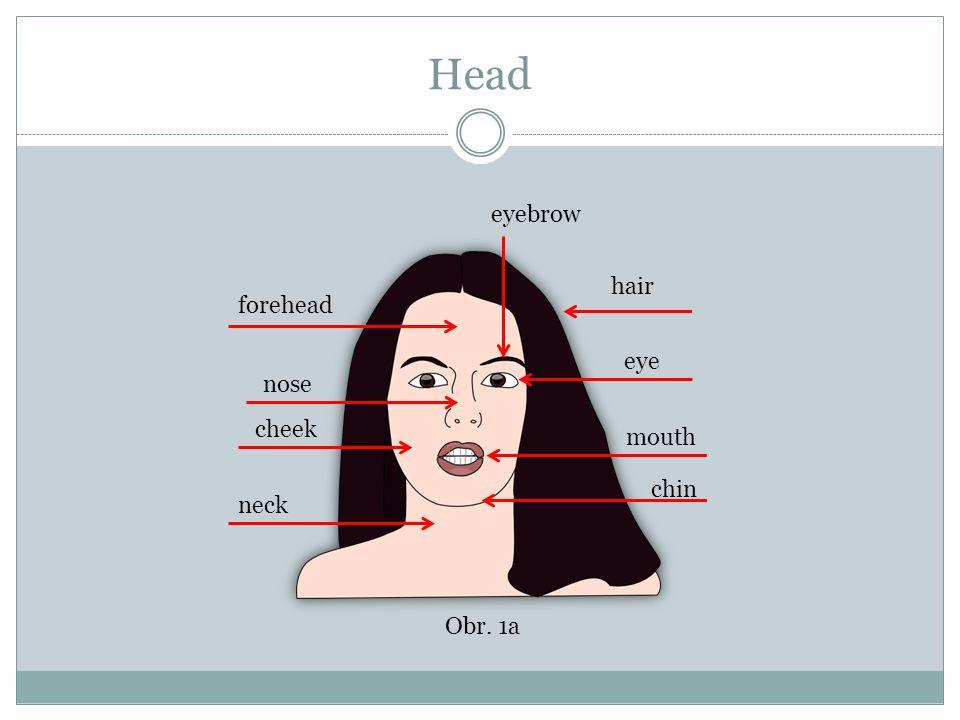 Head Match mouth forehead eye neck hair nose cheek chin eyebrow Obr. 1b