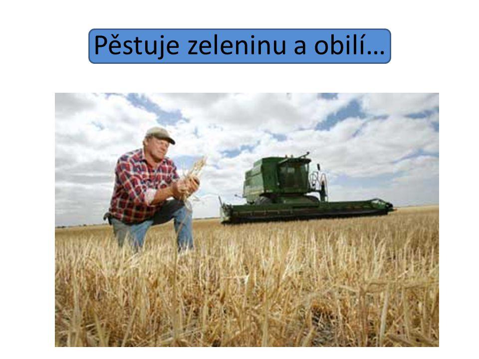 Pěstuje zeleninu a obilí…