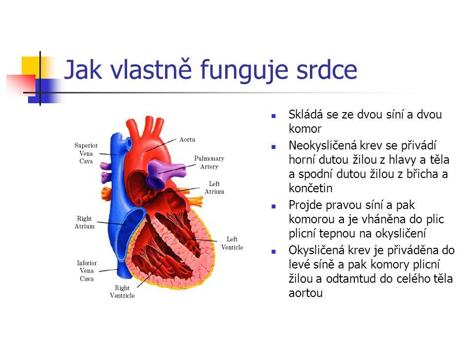 Jak vlastně funguje srdce Skládá se ze dvou síní a dvou komor Neokysličená krev se přivádí horní dutou žilou z hlavy a těla a spodní dutou žilou z bři