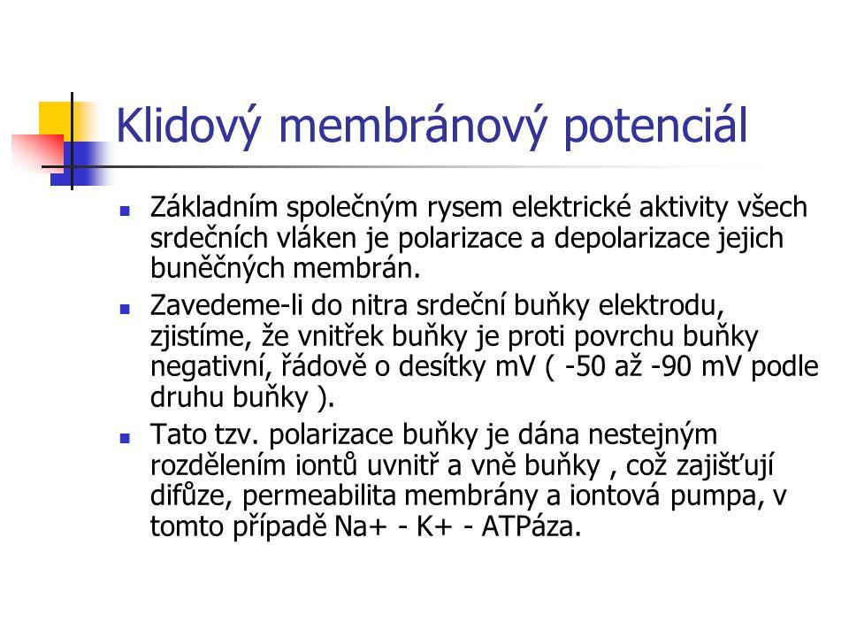 Klidový membránový potenciál Základním společným rysem elektrické aktivity všech srdečních vláken je polarizace a depolarizace jejich buněčných membrá