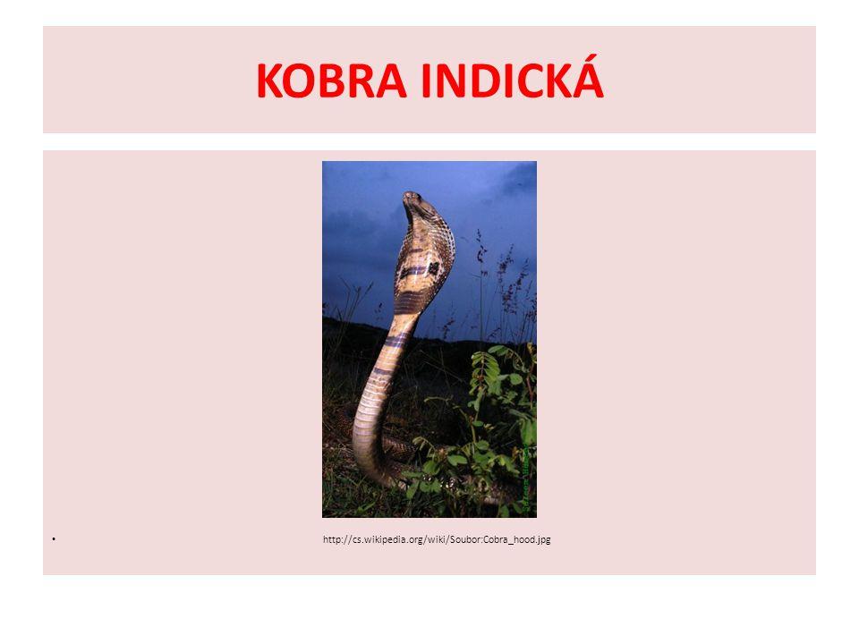 KOBRA INDICKÁ http://cs.wikipedia.org/wiki/Soubor:Cobra_hood.jpg