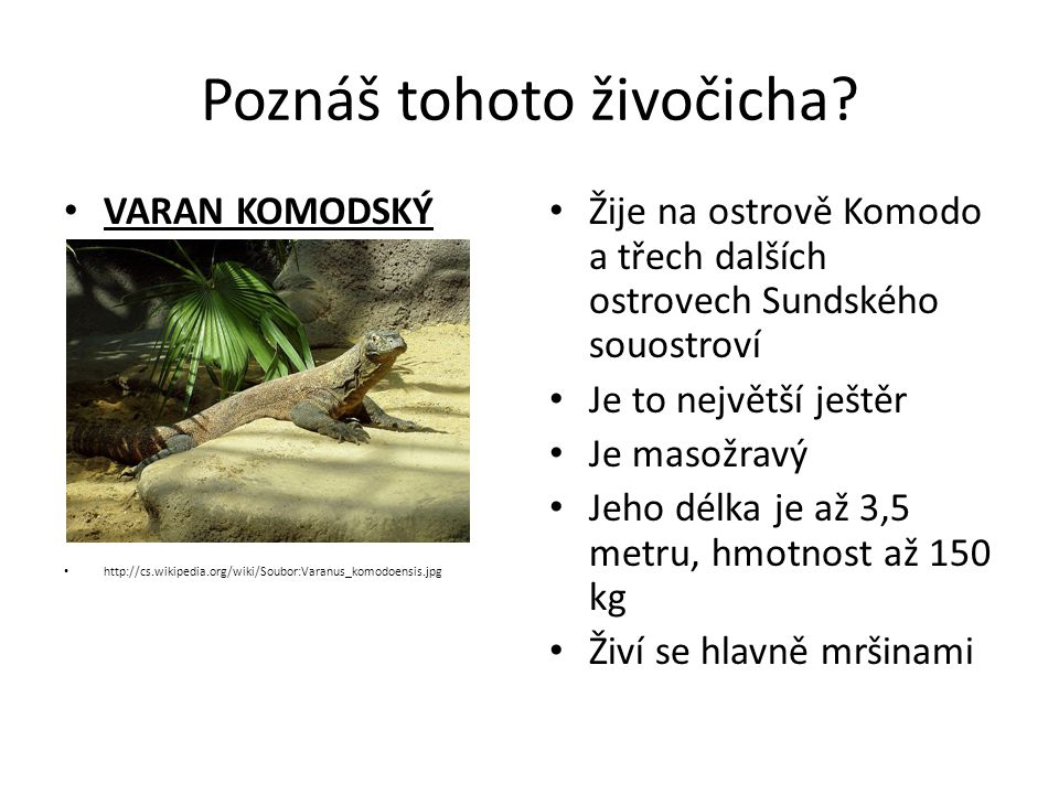 Poznáš tohoto živočicha? VARAN KOMODSKÝ http://cs.wikipedia.org/wiki/Soubor:Varanus_komodoensis.jpg Žije na ostrově Komodo a třech dalších ostrovech S