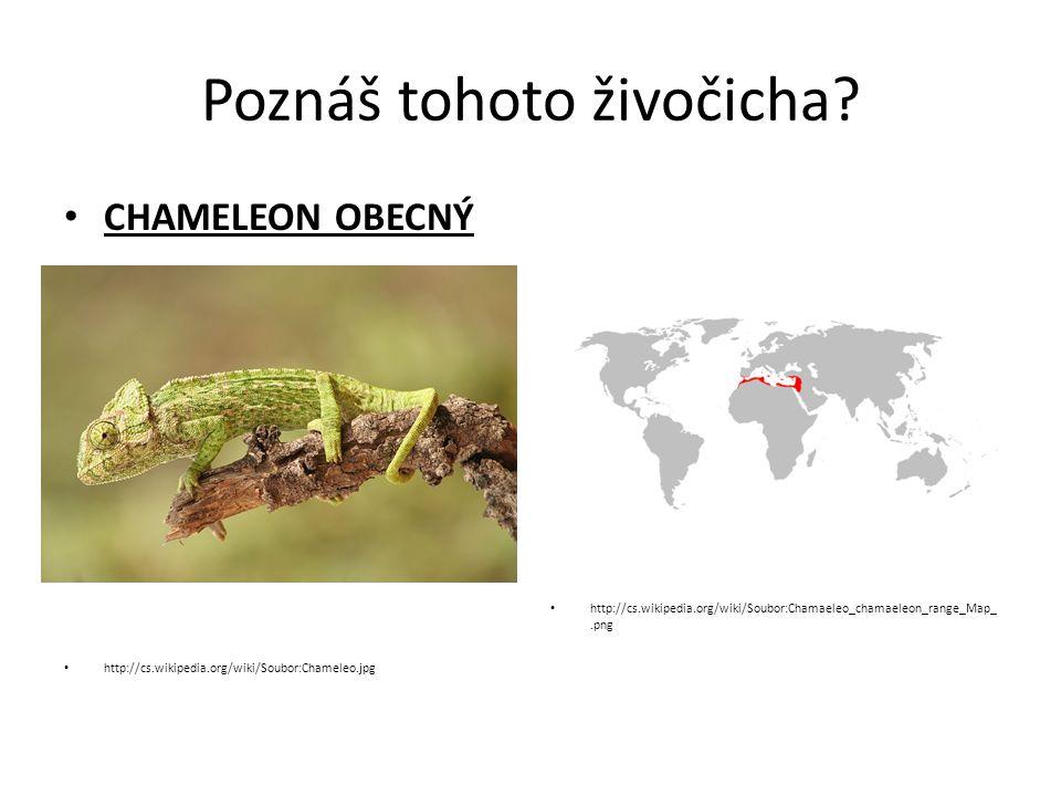 Poznáš tohoto živočicha? CHAMELEON OBECNÝ http://cs.wikipedia.org/wiki/Soubor:Chameleo.jpg http://cs.wikipedia.org/wiki/Soubor:Chamaeleo_chamaeleon_ra