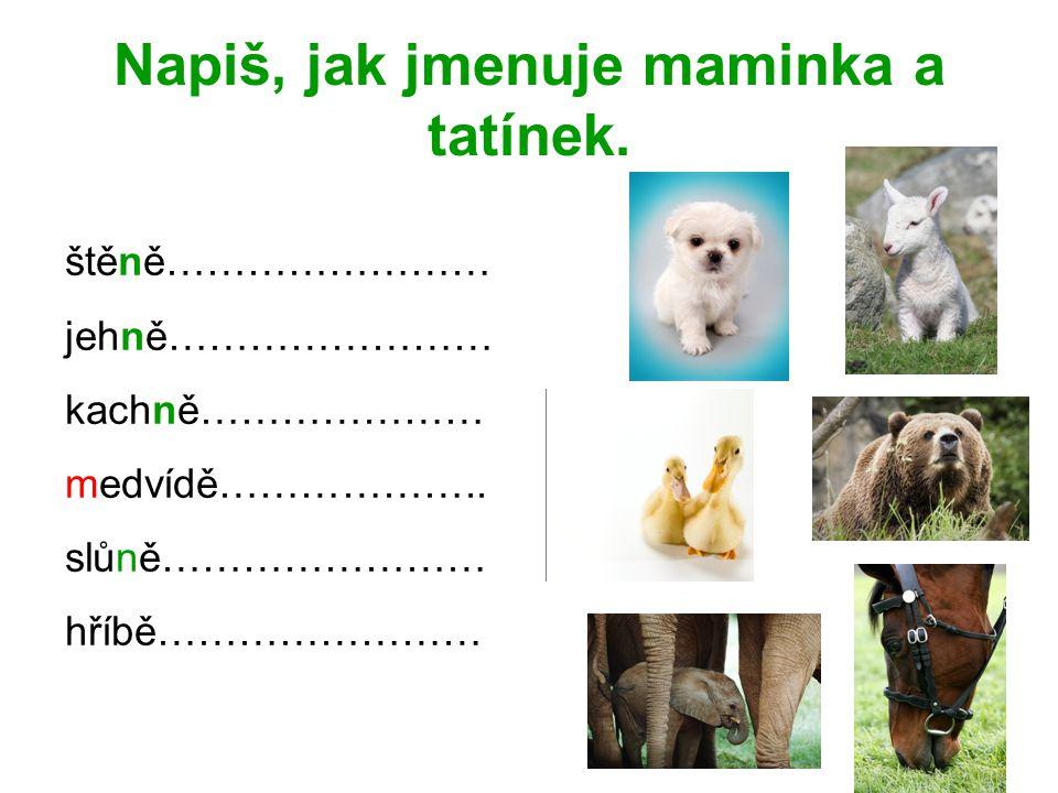 Napiš, jak jmenuje maminka a tatínek. štěně…………………… jehně…………………… kachně………………… medvídě……………….. slůně…………………… hříbě……………………