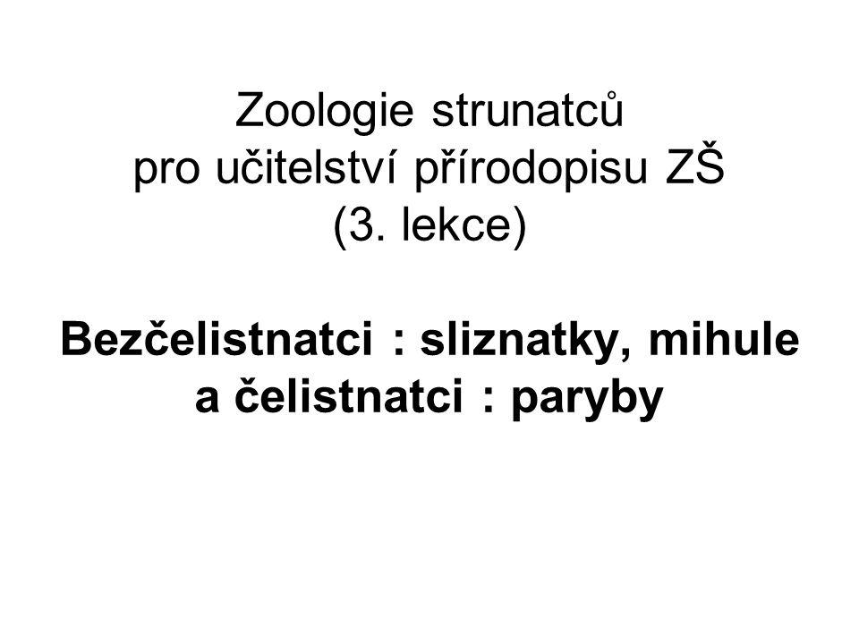 Zoologie strunatců pro učitelství přírodopisu ZŠ (3. lekce) Bezčelistnatci : sliznatky, mihule a čelistnatci : paryby