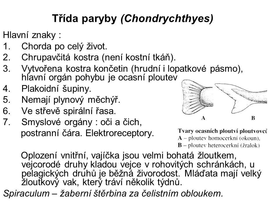 Třída paryby (Chondrychthyes) Hlavní znaky : 1.Chorda po celý život. 2.Chrupavčitá kostra (není kostní tkáň). 3.Vytvořena kostra končetin (hrudní i lo