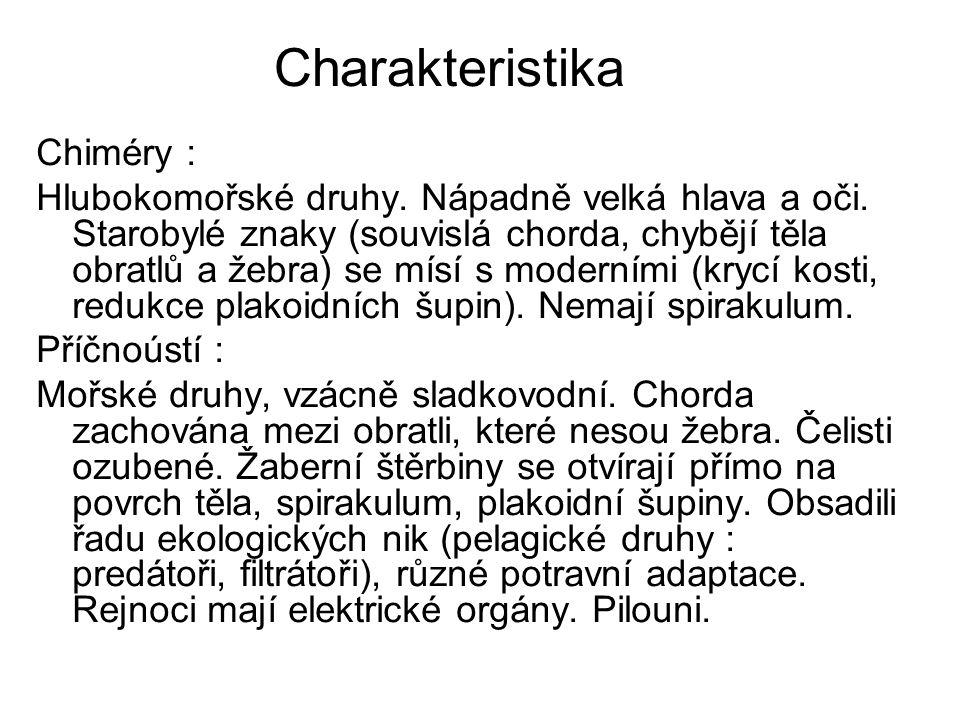 Charakteristika Chiméry : Hlubokomořské druhy. Nápadně velká hlava a oči. Starobylé znaky (souvislá chorda, chybějí těla obratlů a žebra) se mísí s mo