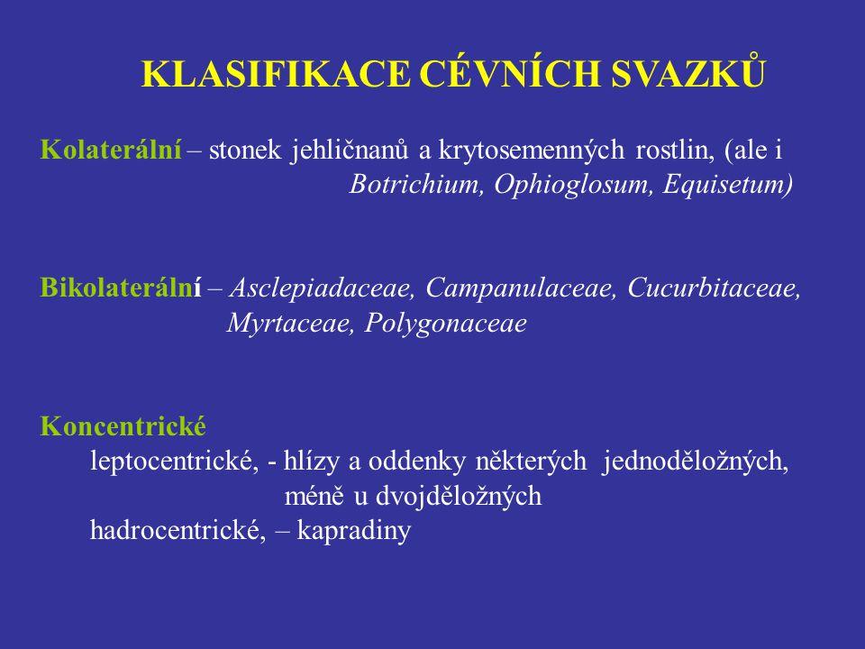 KLASIFIKACE CÉVNÍCH SVAZKŮ Kolaterální – stonek jehličnanů a krytosemenných rostlin, (ale i Botrichium, Ophioglosum, Equisetum) Bikolaterální – Asclepiadaceae, Campanulaceae, Cucurbitaceae, Myrtaceae, Polygonaceae Koncentrické leptocentrické, - hlízy a oddenky některých jednoděložných, méně u dvojděložných hadrocentrické, – kapradiny