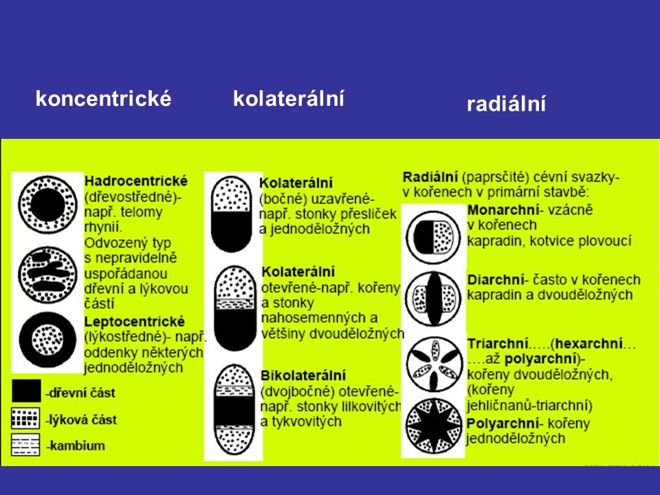 koncentrickékolaterální radiální