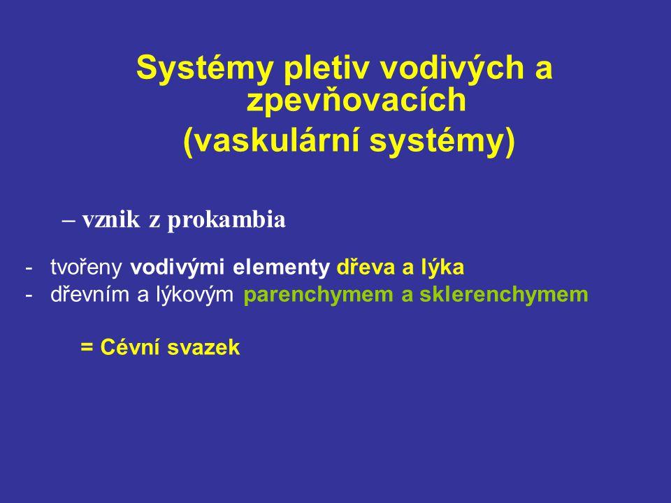 Systémy pletiv vodivých a zpevňovacích (vaskulární systémy) -tvořeny vodivými elementy dřeva a lýka -dřevním a lýkovým parenchymem a sklerenchymem = Cévní svazek – vznik z prokambia