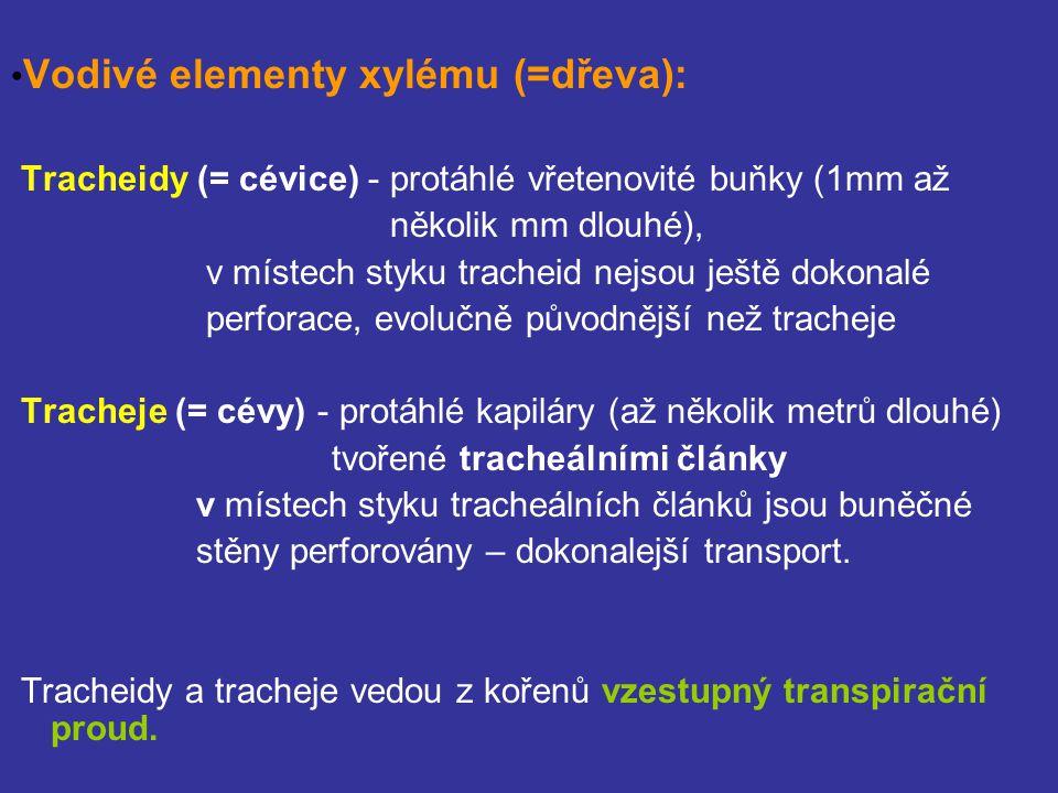 Vodivé elementy xylému (=dřeva): Tracheidy (= cévice) - protáhlé vřetenovité buňky (1mm až několik mm dlouhé), v místech styku tracheid nejsou ještě dokonalé perforace, evolučně původnější než tracheje Tracheje (= cévy) - protáhlé kapiláry (až několik metrů dlouhé) tvořené tracheálními články v místech styku tracheálních článků jsou buněčné stěny perforovány – dokonalejší transport.