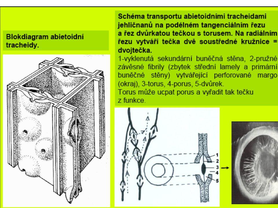 sítkové políčko - kalóza