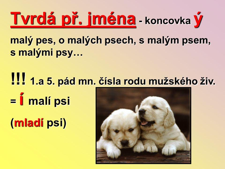 Tvrdá př. jména - koncovka ý malý pes, o malých psech, s malým psem, s malými psy… !!! 1.a 5. pád mn. čísla rodu mužského živ. = í malí psi (mladí psi