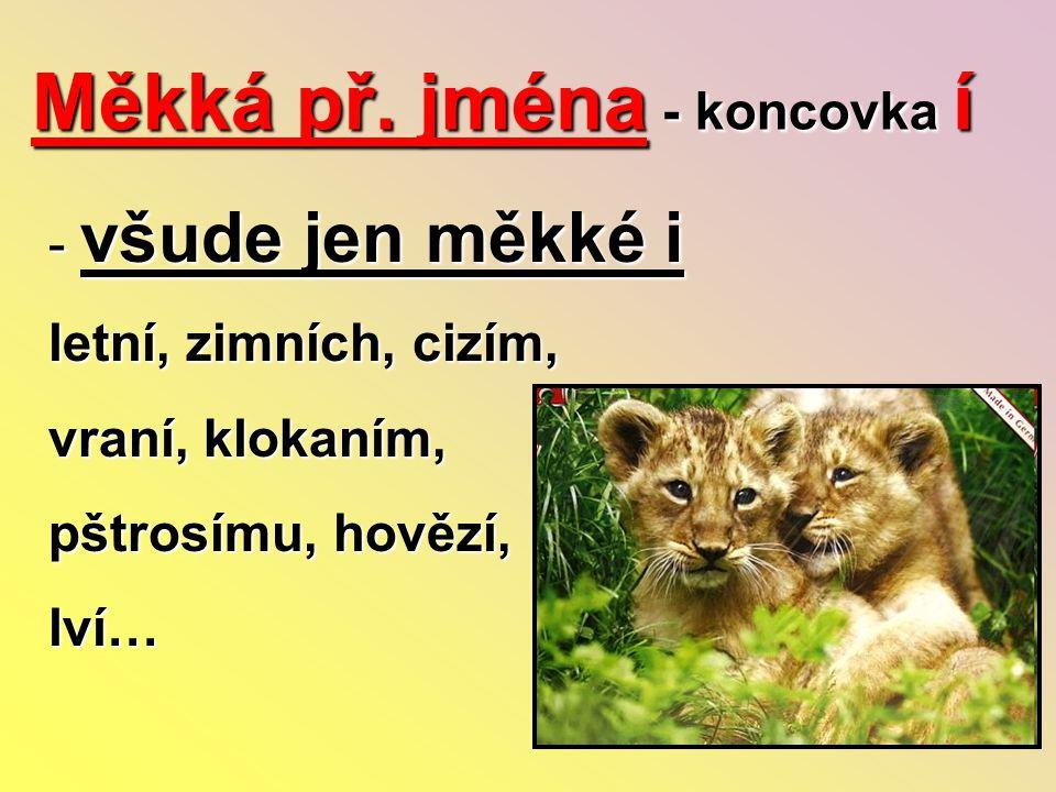 Měkká př. jména - koncovka í - všude jen měkké i letní, zimních, cizím, vraní, klokaním, pštrosímu, hovězí, lví…