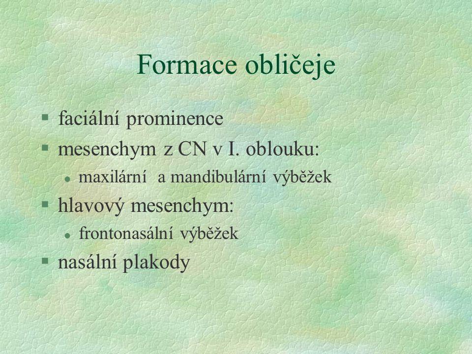 Formace obličeje §faciální prominence §mesenchym z CN v I.