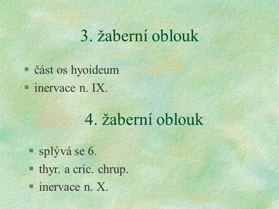 3.žaberní oblouk §část os hyoideum §inervace n. IX.