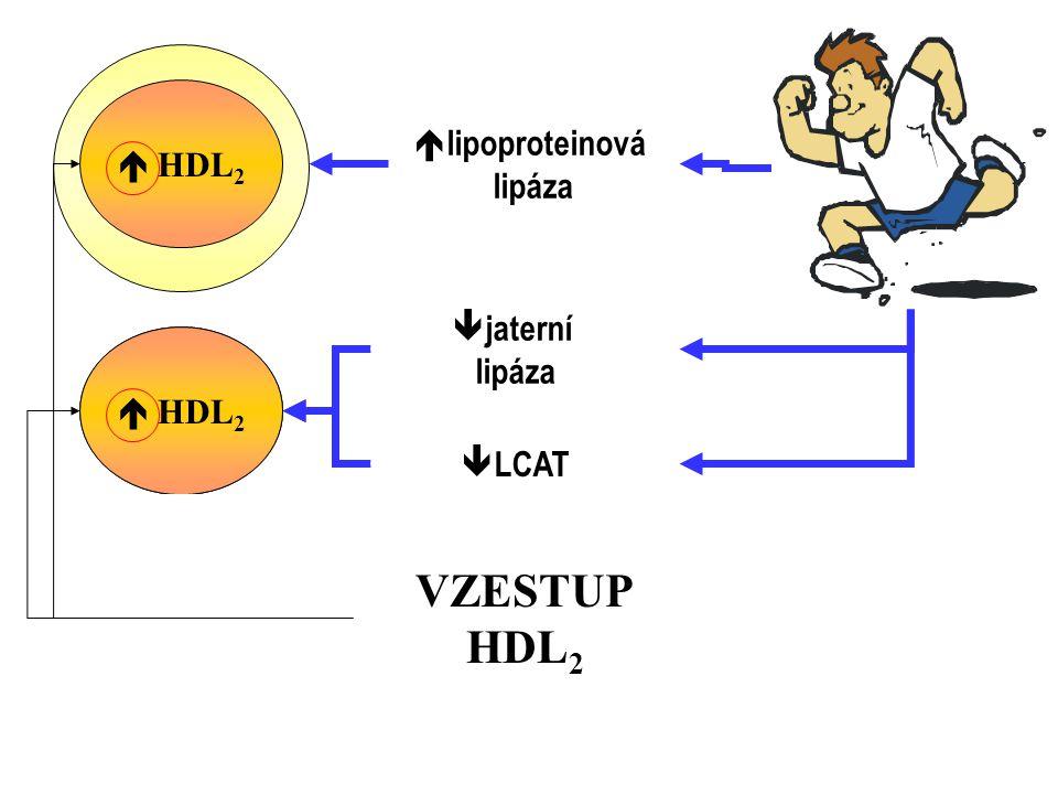  lipoproteinová lipáza VLDL  HDL 2 jaterní lipáza LCAT HDL 2 HDL 3 VZESTUP HDL 2  HDL 2  jaterní lipáza  LCAT