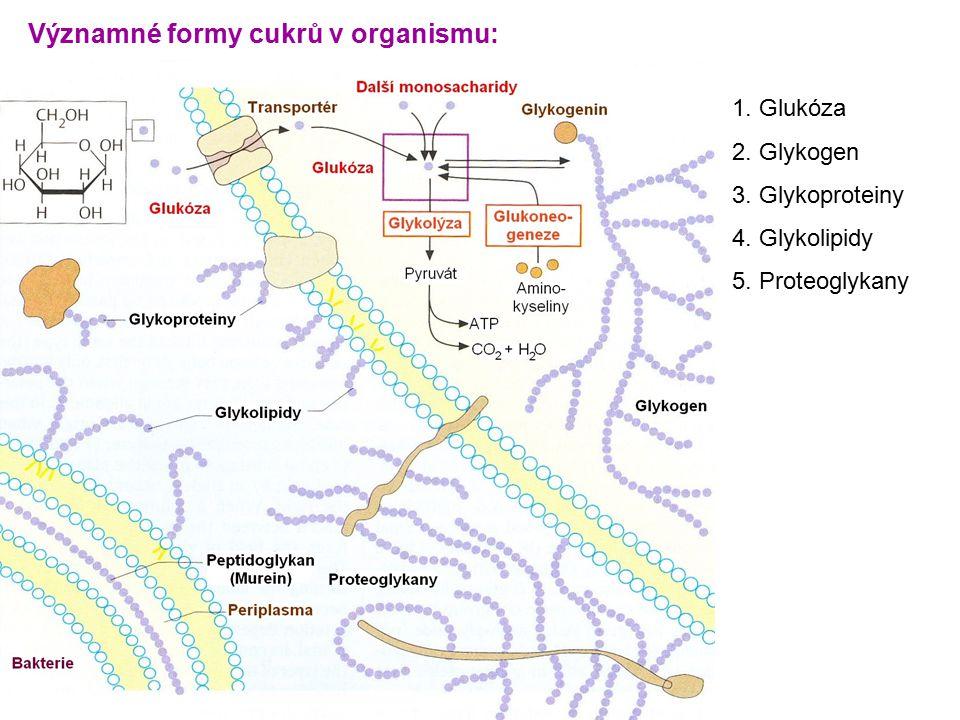 1. Glukóza 2. Glykogen 3. Glykoproteiny 4. Glykolipidy 5. Proteoglykany Významné formy cukrů v organismu: