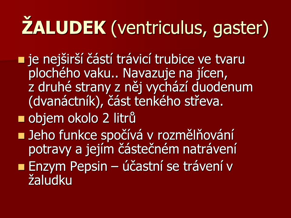 ŽALUDEK (ventriculus, gaster) je nejširší částí trávicí trubice ve tvaru plochého vaku.. Navazuje na jícen, z druhé strany z něj vychází duodenum (dva