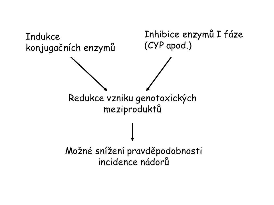 Indukce konjugačních enzymů Inhibice enzymů I fáze (CYP apod.) Redukce vzniku genotoxických meziproduktů Možné snížení pravděpodobnosti incidence nádorů